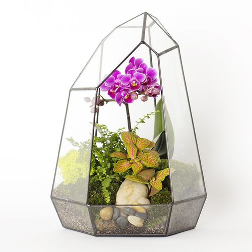 Настольная экосфера Орхидея (30 см)