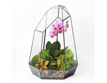 Настольная экосфера Орхидея (40 см)