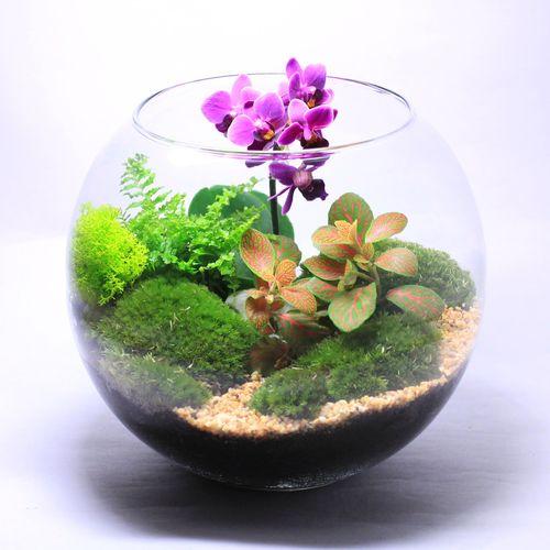 Настольная экосфера Сад орхидей